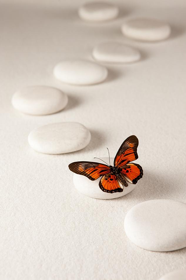 TEAM CBT Emerging Butterfly